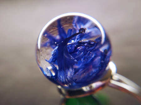 Dried cornflower flower plant epoxy resin ball ring necklace pendant jewelry macro photo. Stock fotó