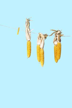 corncob: hanging corncob
