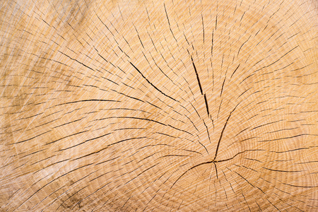 Wood, tree cut, annual rings as a background