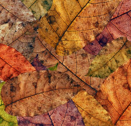 falltime: leaves - texture Stock Photo