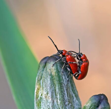 Detal of the vermination bugs photo