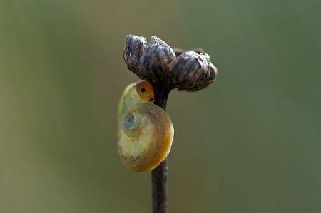 palmer: Detail (close-up) of a palmer Stock Photo