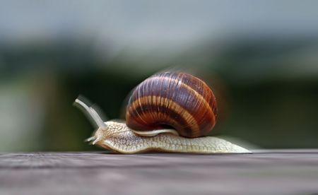 precipitate: Image of the speeding snail