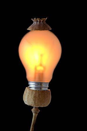 sensible: Shot of a poppy-head and bulb