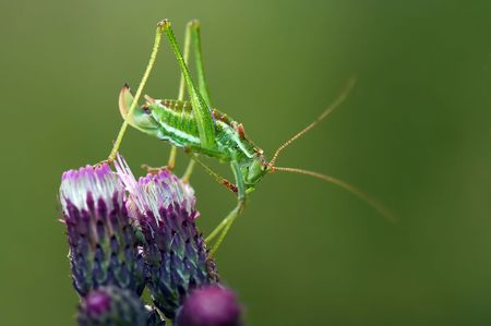 Close-up of a grasshopper with aching small foot Reklamní fotografie