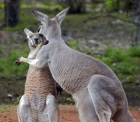 solace: Love - shot of a two roos in embrance