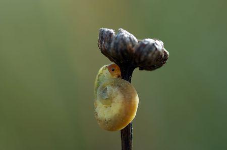 palmer: Under umbrella - detail (close-up) of a palmer