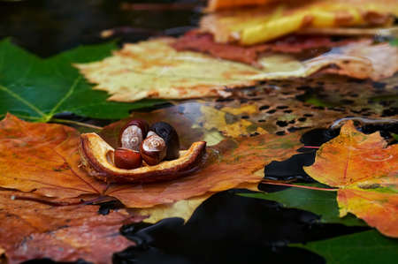 falltime: Autumn boat - detail of the autuom leaves and chestnut Stock Photo