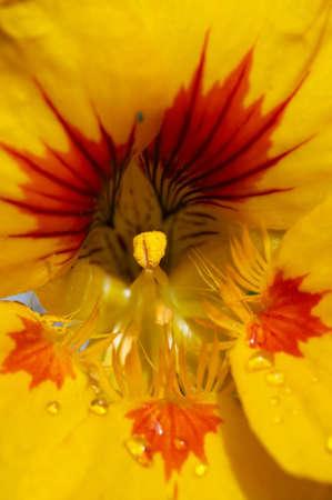 carpel: Abstract shot - close-up (macro) of the bloom