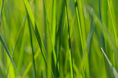 gramineous: texture - grass