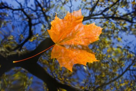 a mirage: Shot of the autumn leaf on the water surface