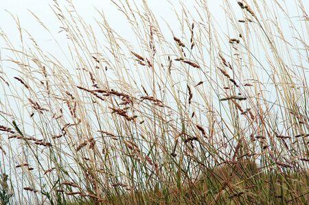 greengrass: grass