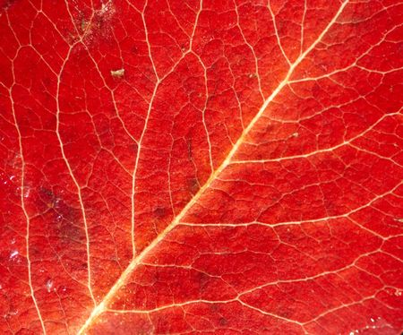 Ribbing - close-up of the autumn leaf Stock Photo