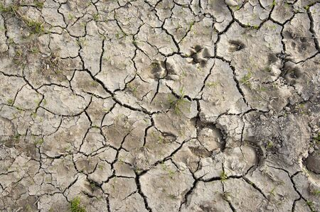 parched: Parched earth with animal´s tracks