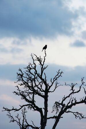 songbird: Songbird on the rampike