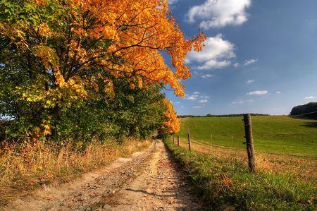 campagna: Gamma di mucca paesaggio - colori autunnali - carrello-strada e in autunno