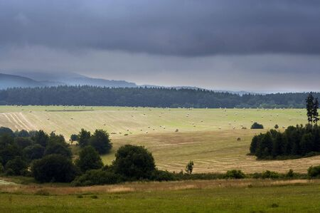 haymaking: meadows, fields and forest - agriculture - haymaking time