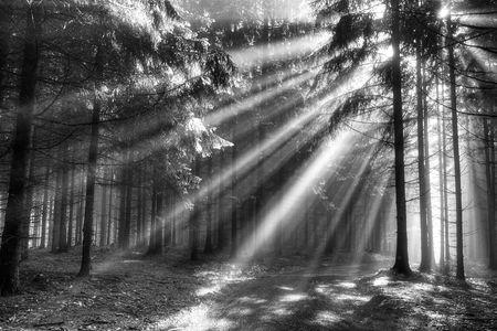 naald bos in de vroege ochtend - een film van mist  Stockfoto