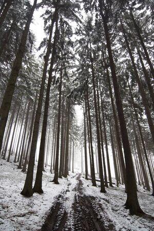 forest road in fog - bleak photo