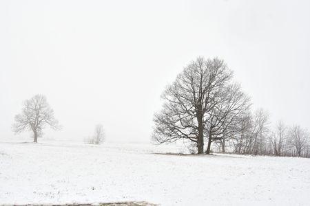 onbepaalde: Shot van het besneeuwde winter landschap met boom