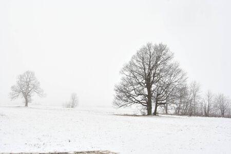 onbepaalde: besneeuwde winter landschap met boom