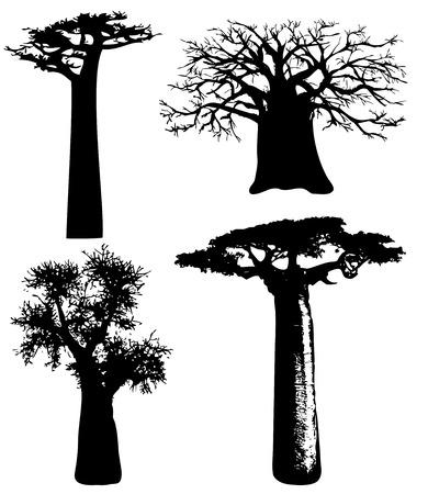 Baobabs - vecteur Banque d'images - 8860862