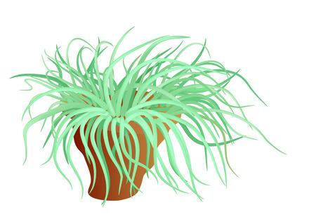 awry: sea anemone - sea flower