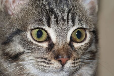 greeneyes: cat