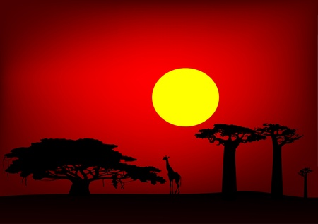 Africa sunset  - vector Vector