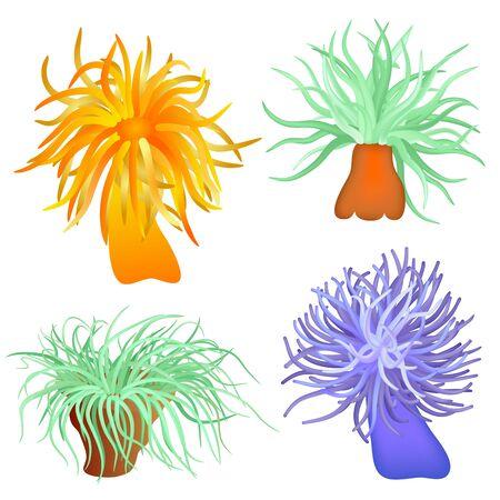 sea anemone: vector sea anemone - sea flower