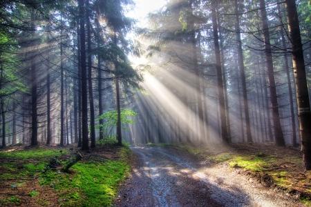 rayos de sol: Regalo de la luz - vigas de Dios