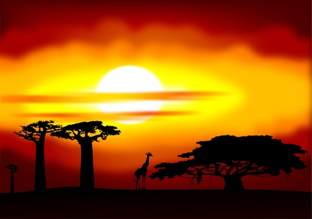 africa baobab tree: Africa sunset