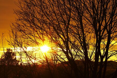 cheerless: autumn sun and branches of bare trees