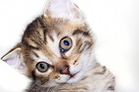 furry animals: kitten head - astonished look