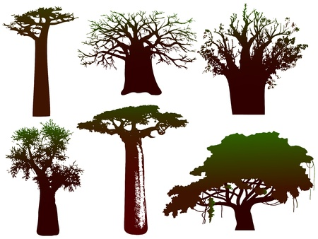 silhouettes of various African trees and bushes