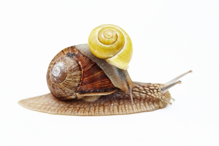 big and small snail - cargo - truck photo