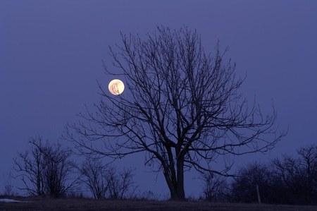 otherworldly: Solitary tree and full moon - night scene