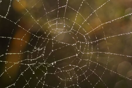 spider web with glistening dewdrops photo