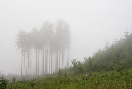 cleared: forest in the fog - cleared land Stock Photo