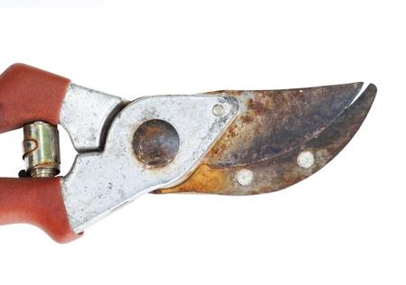 garden shears: viejas tijeras oxidadas tijeras de jard�n -