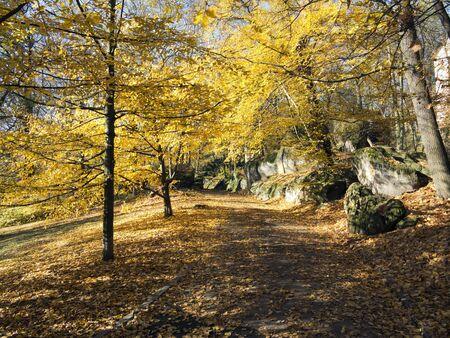 lyrical: autumn park with trees Stock Photo