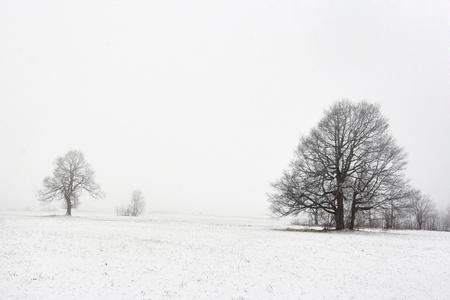 onbepaalde: bomen in de winter landschap