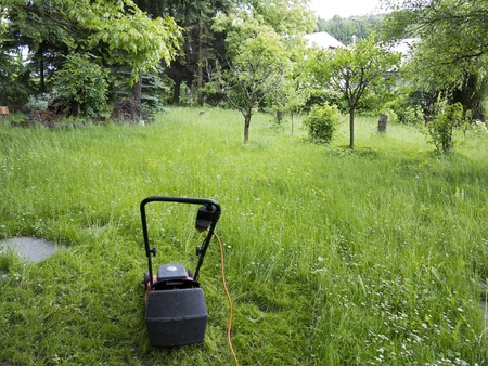 gramineous: Mower and garden overgrown with weeds