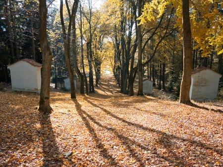leisureliness: avenue of trees - Way of the Cross Stock Photo