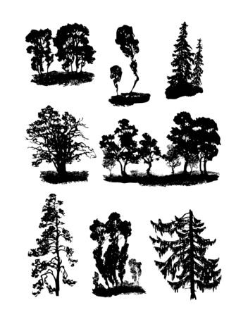 coniferous tree: Vector various trees Illustration