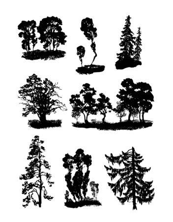 broadleaved tree: Vector various trees Illustration