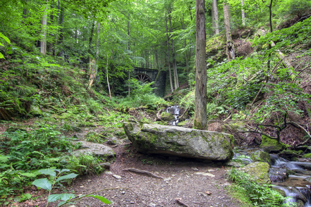 hardwoods: Forest - deciduous forest with ravines and brook Stock Photo