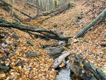 hardwoods: Forest - deciduous forest with ravine