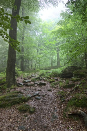 hardwoods: morning in the forest - silence of the forest Stock Photo