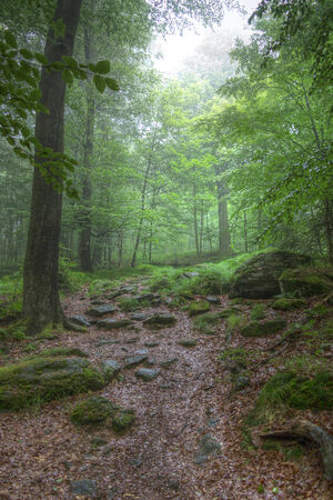 hardwoods: morning in the deciduous wood - silence of the forest Stock Photo